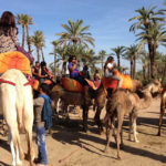 Horse Tour activities and Camel Ride in Marrakech